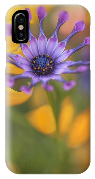 South African Daisy IPhone Case