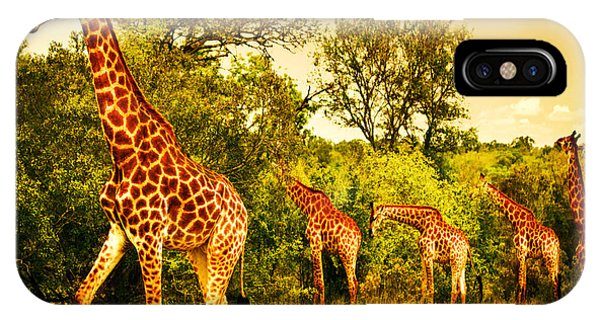 South African Giraffes IPhone Case