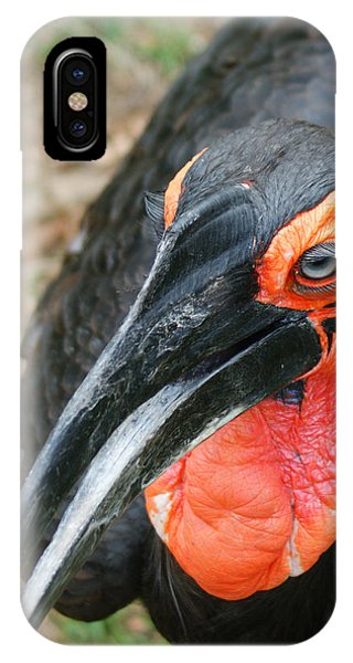 Southern Ground Hornbill IPhone Case