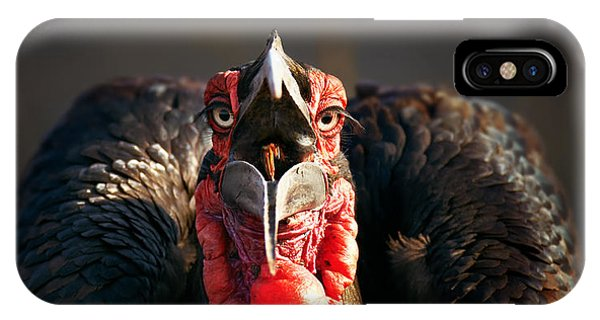 Head And Shoulders iPhone Case - Southern Ground Hornbill Swallowing A Seed by Johan Swanepoel