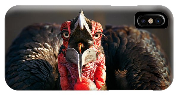 Swallow iPhone Case - Southern Ground Hornbill Swallowing A Seed by Johan Swanepoel