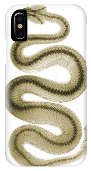 Serpent iPhone Case - Southern Pacific Rattlesnake, X-ray by Ted Kinsman