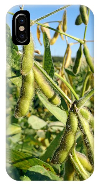 Soybeans In Autumn IPhone Case