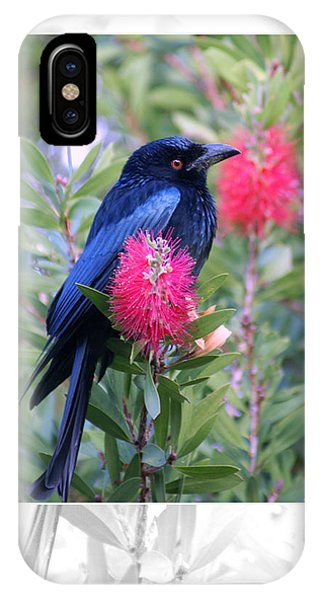 iPhone Case - Spangled Drongo by Holly Kempe