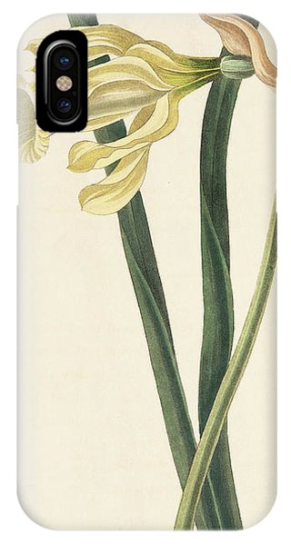 Flora iPhone Case - Spanish Daffodil by Margaret Roscoe