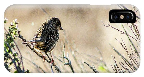 Snarky Sparrow IPhone Case