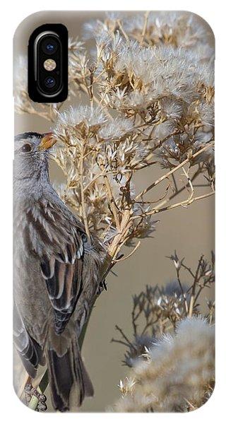 Sparrow IPhone Case