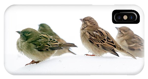 Sparrows In The Snow IPhone Case
