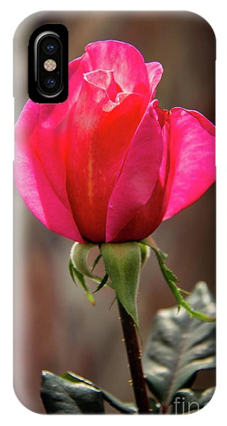 Rosebush iPhone Case - Special Rose Bud by Robert Bales