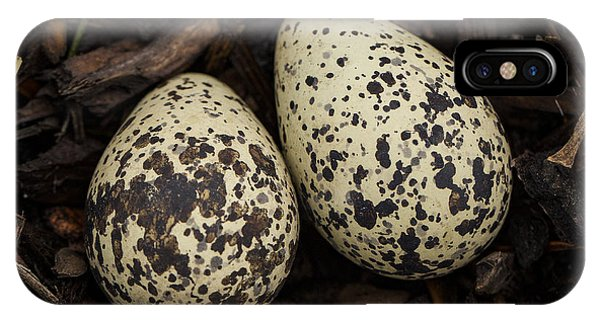 Killdeer iPhone Case - Speckled Killdeer Eggs By Jean Noren by Jean Noren