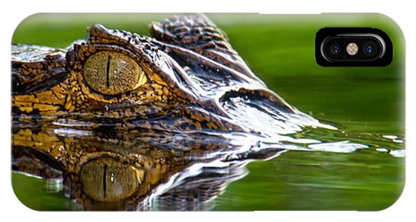 Spectacled Caiman Caiman Crocodilus IPhone Case