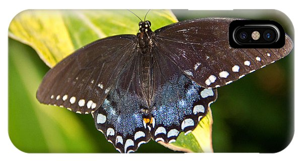 iPhone Case - Spicebush Swallowtail by Kelly Holm