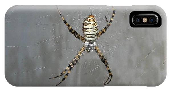 iPhone Case - Spider by Adrienne Petterson