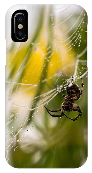 Spider And Spider Web With Dew Drops 04 IPhone Case