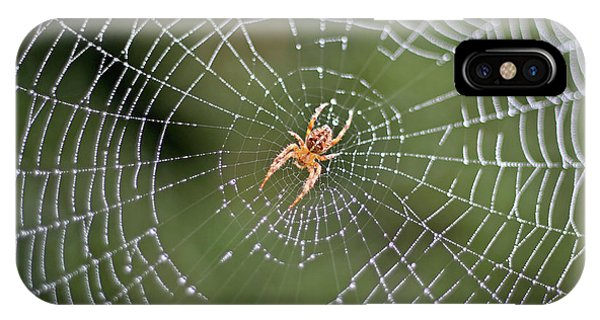 Spider In A Dew Covered Web IPhone Case
