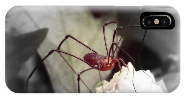 Spider On A Flower IPhone Case
