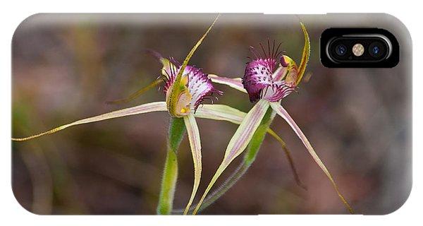 Spider Orchid Australia IPhone Case