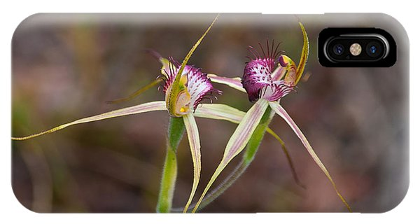 Spider Orchid Australia IPhone Case