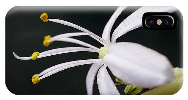 Spider Plant Flower IPhone Case