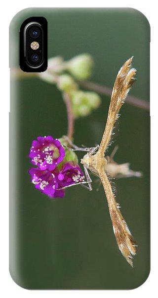 Spiderling Plume Moth On Wineflower IPhone Case