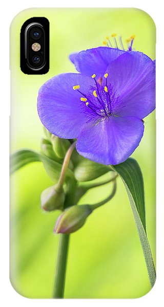 Spiderwort Wildflower IPhone Case