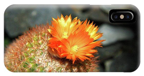 Spiky Little Cactus With Orange Flower IPhone Case