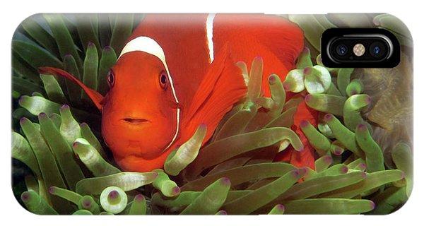 Spinecheek Anemonefish, Indonesia 2 IPhone Case