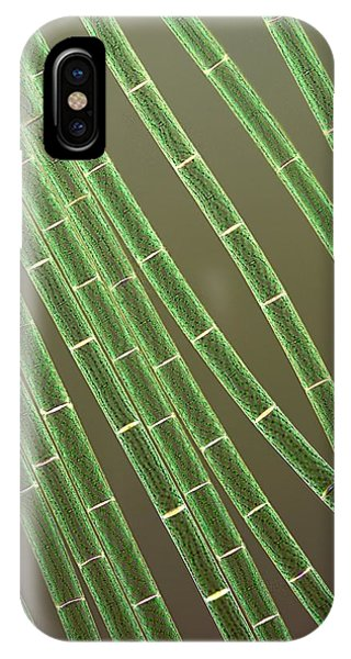 Spirogyra Algae, Light Micrograph Phone Case by Jerzy Gubernator