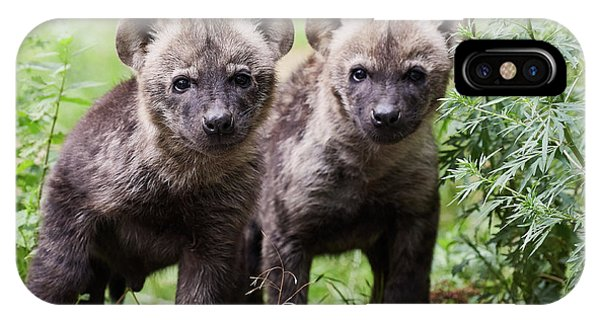 IPhone Case featuring the photograph Spotted Hyena Cubs I by Nick Biemans