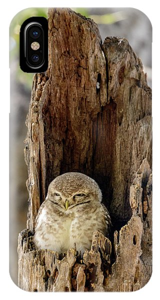 Spotted Owlet IPhone Case