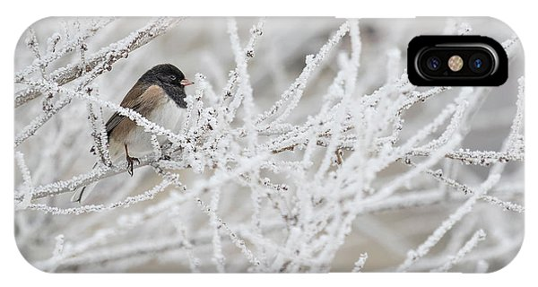 Spotted Towhee In Winter IPhone Case