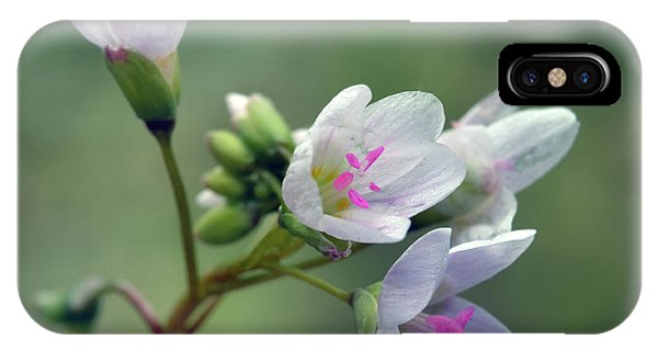 Spring Beauties IPhone Case