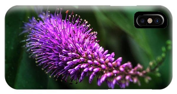 spring beautiful flowers callistemon in subtropics of Russia IPhone Case