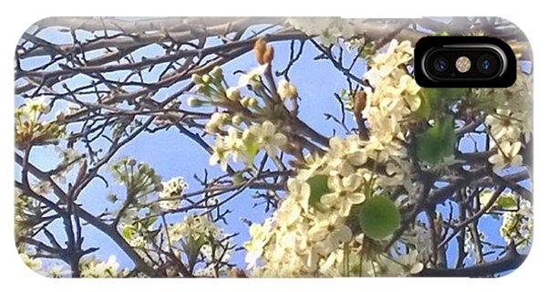 Tree iPhone Case - #spring #blossoms Have Arrived :-) by Shari Warren