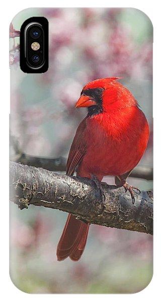 Spring Cardinal 2 IPhone Case