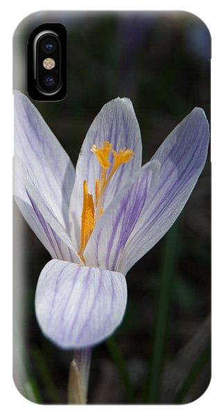 Spring Crocus IPhone Case