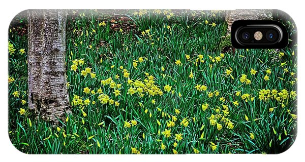 Spring Daffoldils IPhone Case