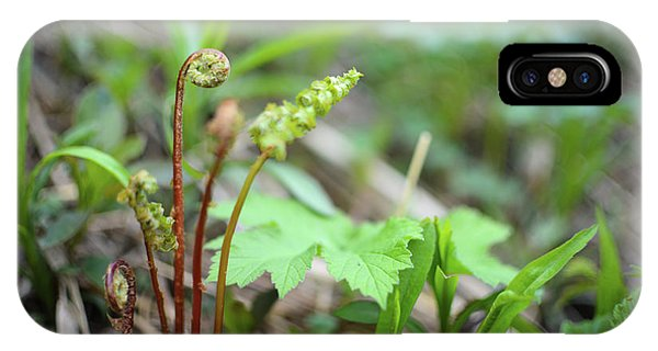 Spring Ferns IPhone Case