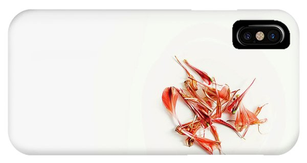 Nature Still Life iPhone Case - Spring Flower by Scott Norris