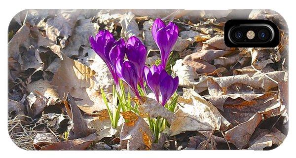 Spring Gathering IPhone Case