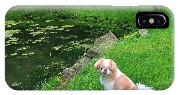 IPhone Case featuring the photograph Spring Green Japanese Chin by Roger Bester