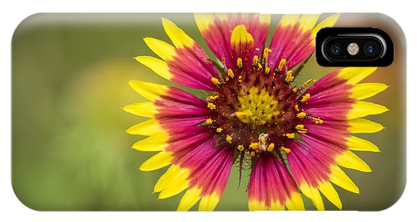 Spring Indian Blanket IPhone Case