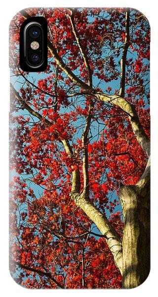 Spring Maple IPhone Case