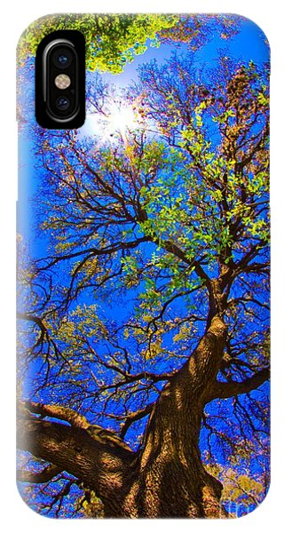 Spring Oak IPhone Case