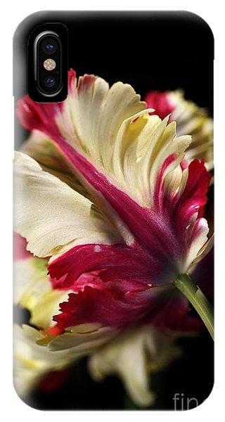 Spring Parrot Tulip IPhone Case