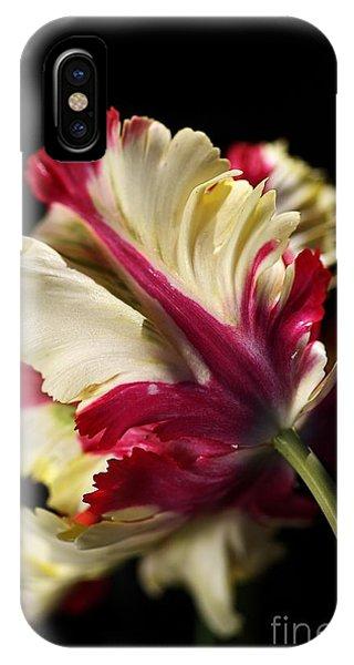 Spring Parrot Tulip IPhone Case