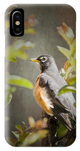 Spring Robin IPhone Case