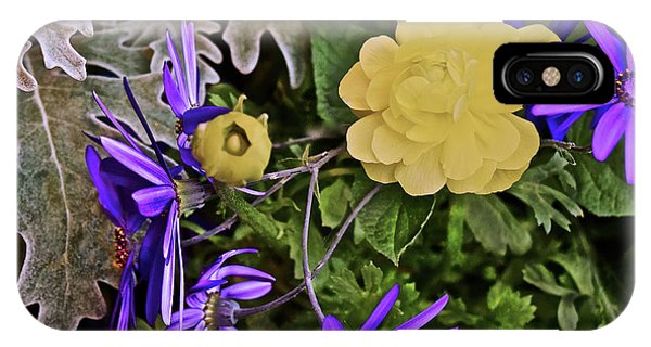 IPhone Case featuring the photograph Spring Show 18 Persian Buttercup With Florist's Cineraria 2 by Janis Nussbaum Senungetuk