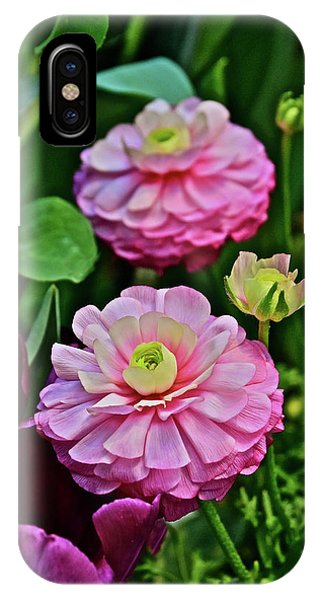 IPhone Case featuring the photograph Spring Show 18 Pink Ranunculus 1 by Janis Nussbaum Senungetuk