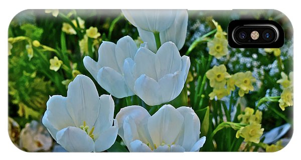 IPhone Case featuring the photograph Spring Show 18 White Tulips And Minnow Daffodils by Janis Nussbaum Senungetuk